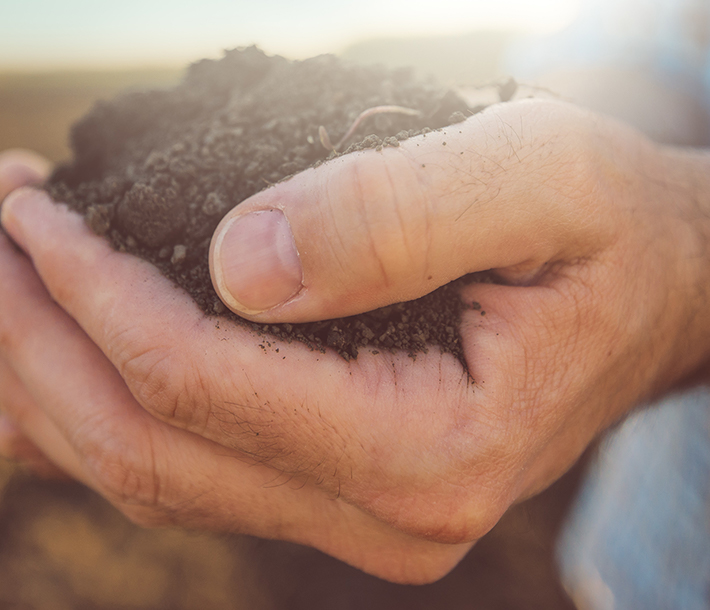 Farmer holding soil